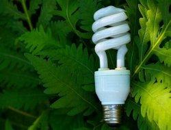 Особенности организации утилизации компактных люминесцентных ламп
