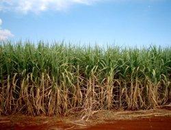 Обзор российского рынка биотоплива