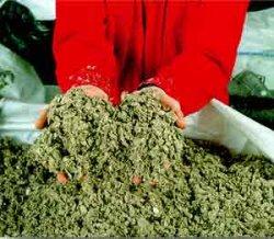 Европейская ассоциация производителей биотоплива сделала исследование в области биомассы
