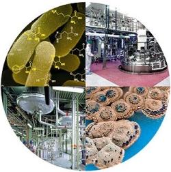 В новосибирском наукограде Кольцово к 2015 году появится биотехнопарк