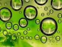 Shell начинает выпускать биотопливо