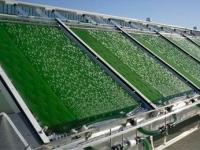 Рынок биотоплива в ожидании скорой революции?