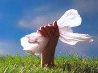 Биоразлагаемый пластик увеличивает выбросы парниковых газов