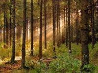 Каждое пятое дерево вевропейских лесах повреждено