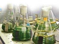 В Литве создадут государственную биржу биотоплива