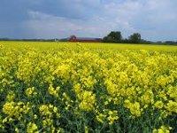 В Тверской области будут выращивать сырьё для производства биотоплива