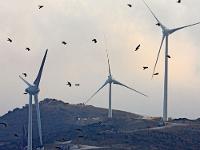 Ветряки иптицы: совместима ли зелёная энергетика сэкологией?