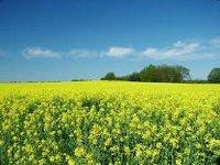 Глава Nestle объяснил рост цен на продукты питания развитием биотопливной отрасли