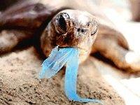 Власти филиппинского города призывают отказаться от пакетов из пластика