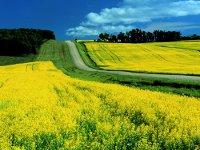 Агрохолдинг Юг Руси нацелился на производство биотоплива