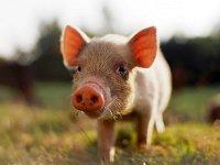 Биогазовая установка на отходах животноводства