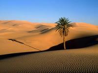 Солнечные станции в Сахаре