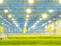 Светодиодные светильники для тепличных хозяйств