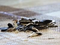 Биотопливо из шелухи семечек