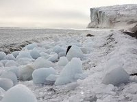 Средства на очистку арктики
