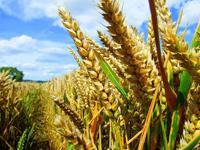 Биотопливо первого поколения