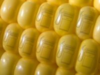 Биотопливо из кукурузы