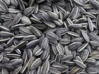 Алтайские производители начали поставлять биотопливо в Кузбасс