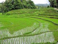 Голландские учёные научились добывать электричество нарисовых полях