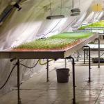 Philips разрабатывает LED-освещение для«городского фермерства»