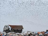Товар-рекордсмен поколичеству сопутствующих отходов производства