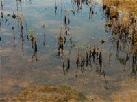 Уровень воды вБайкале катастрофически снижается