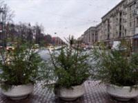 Новогодние елки после праздника можно отправить напереработку