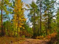 ВГосдуму внесен законопроект осоздании вокруг городов зеленых поясов