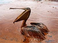 ВАвстралии изобрели новый метод борьбы споследствиями разлива нефти