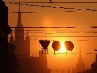 ВМоскве прошли акции, приуроченные ко Дню экологического долга