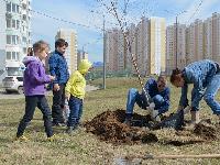 Власти Москвы объявили конкурс напосадку деревьев вцентре иза МКАДом