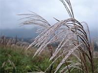 Биотопливо может нагревать планету