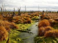 МИБ предоставил грант дляпроекта повосстановлению торфяных болот вРоссии присотрудничестве сWetlands International иKfW