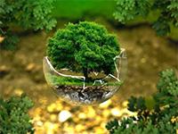 «Почта Банк» посадил миллионное дерево вчесть наступающего Года экологии