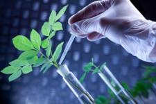 Более 13 млн. рублей выделено намодернизацию предприятий всфере биотехнологий ипереработки растительного сырья