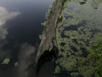 Ученые изРФ иФРГ реализуют проект поутилизации отходов переработки водорослей