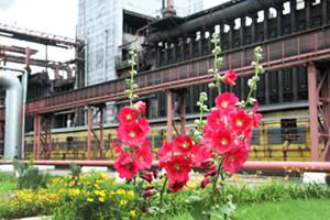Алтай-Кокс инвестирует вприродоохранные мероприятия