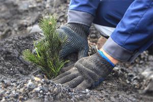 «Южный Кузбасс» рекультивирует нарушенные земли
