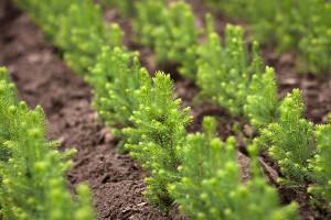 Работы полесовосстановлению вЯрославской области проведут наплощади 150 гектаров