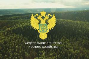 Итоги акции «Зеленая Россия» вЗауралье: собрано ивывезено 347 тонн мусора