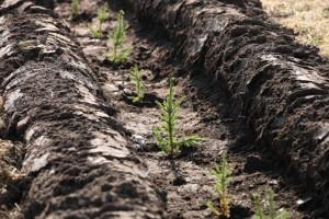 План лесовосстановления в2020году вВологодской области выполнен