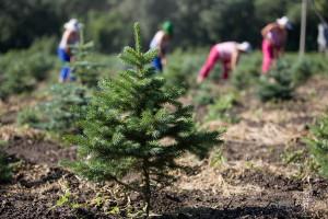 ВЦентральной России лесовосстановительные работы врамках федпроекта «Сохранение лесов» выполнены на100%