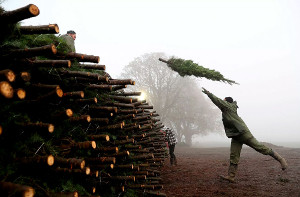 Курс наэкологичное потребление: врегионах открылись пункты сбора новогодних елей