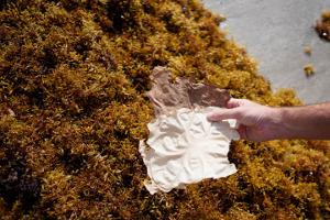 Бумага изтоксичных водорослей