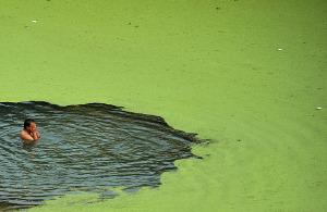 Ученые создали перспективный материал дляочистки водоемов отвредоносной биомассы