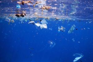 Состоялась встреча экспертов врамках российско-норвежского проекта МОР-5 поморскому мусору имикропластику