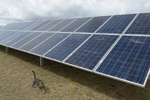Лидер солнечной энергетики готов поделиться зеленой энергией