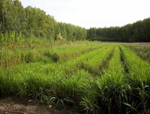 Завод попроизводству биоразлагаемой посуды построят вНовосибирске