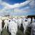 РФ предложила Японии помощь вочистке отходов «Фукусимы»