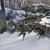 12 тонн елок утилизируют во Владивостоке